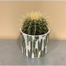Cactus + cache pot
