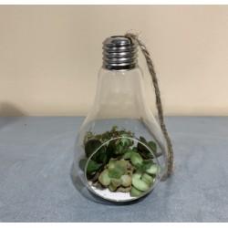 Ampoule déco succulentes