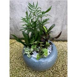 Composition plantes vertes